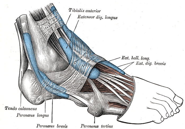 Peroneal Tendon Running Shoes